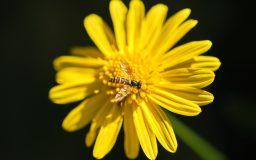 temps de flors particular